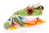 Green Frog in concepts