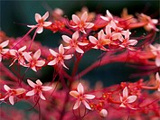 USA, Red blossoms