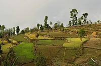 Asia, Nepal, View of rural landscape near Sarangkot