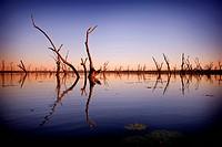 Lake Nuga Nuga sunrise over trees naturally drowned by the lake, Nuga Nuga National Park, Central Queensland, Australia