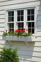 Flowers growing in window box of single family home