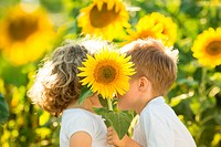 Children hiding by sunflower