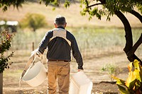 Caucasian farmer carrying buckets in olive grove
