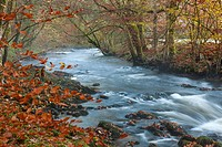 The River Teign flowing through Hitchcombe Wood in autumn in the Dartmoor National Park.