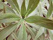 Close up of leafy plant