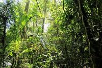 Jungle Venezuela