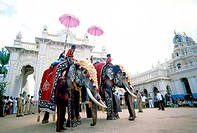 dassera festival decorated painted elephants procession mysore karnataka india