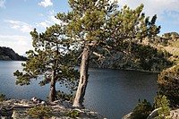 Pine trees on Estany Major de Colomers in Aigüestortes i Estany de Sant Maurici National Park - Lleida, Cataolina, Spain.