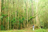 San Eusebio Cloud Forest Merida Venezuela.