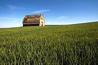 USA, WASHINGTON STATE, PALOUSE COUNTRY, OLD BARN IN WHEAT FIELD.