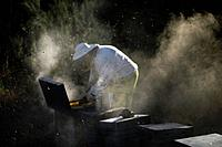 A beekeeper of Puremiel, a honey company that produces organic raw honey, check beehives using smoke in Puerto Serrano, Cadiz, Andalusia, Spain, June ...