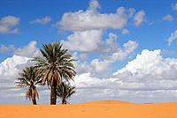 Desert landscape near Merzouga, southeast Morocco.