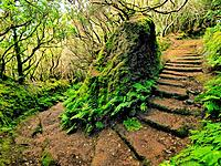 Anaga Mountains and Virgin Forest on Tenerife, Canary Islands, Spain.