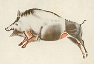 Painting of a boar in a palaeolithic cave