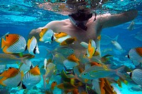 Rarotonga Island. Cook Island. Polynesia. South Pacific Ocean. Diving in the lagoon with The big fish, Diving Centre in Rarotonga. Dive in 1-3 meters ...