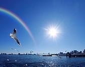 Seagulls flying around harbour and a rainbow, Chuo_ku, Tokyo, Japan