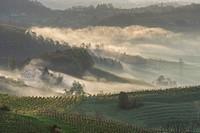 Fog and farmhouses in the first morning light, Ratsch an der Weinstraße, Styria, Austria