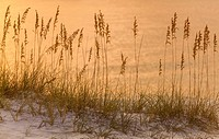 Sunset reflections on the Gulf of Mexico with designs made by beach grass, Orange Beach, Alabam.