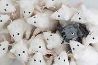 Single black mouse integrated in a group of human-like white mice.