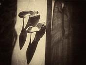 Woman´s High Heel Shoe on a Parquet Floor.