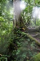 Tingo Maria National Park.Rain forest in Huanuco department. Peru.