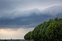 Storm clouds and trees blowing in the wind at Whitby Lions Promenade in Whitby, Ontario, Canada.