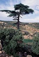 Col du Zad, N13 road, Middle Atlas, Morocco.