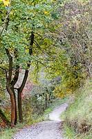 Path in the Prokopske udoli. Prague, Czech Republic.