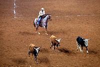 Chasing Steers - Houston Rodeo - Houston, TX.