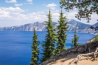Pines trees above Crater Lake. Crater Lake National Park, Oregon, United States.