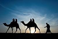 India, Rajasthan, Jaisalmer, Camel Ride, sunset.