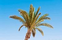 palm at sea