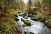 Landscape of a little River (Keine Ohe) flowing through the forest in autumn in the Bavarian forest, Bavaria, Germany.