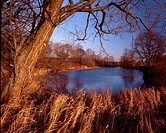 Autumn pond. Podlasie region. Poland