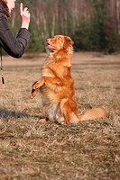 Toller shows trick