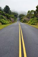 USA, Hawaii, Waimea, street in fog, Kokee State Park