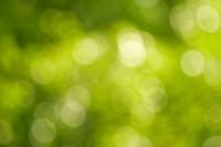 background of beautiful green nature bokeh