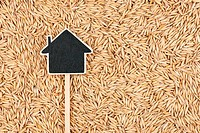 House pointer, the price tag lies on oat