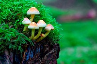 Small mushrooms growing from a tree stump.