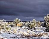 horse with dark sky and snow in arizona
