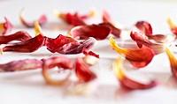 aged petals
