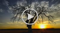 Dry tree at sunset. Almansa. Albacete province. Spain