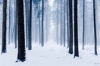 Germany, Bavaria, Augsburg county, Augsburg Western Woods Nature Park, winters, trees, snow, cold, mood, light, cold, weird, ice, wood, firs, spruces,...