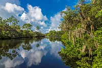 South Creek in Oscar Scherer State Park in Nokomis Florida.