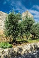 Monteriggioni fortress walls. Tuscany, Italy.