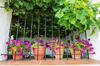 Window with bars and flowerpots, La Pared, La Manchuela, Albacete province, Castilla-La Mancha, Spain