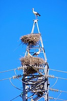 Stork in a high tension tower in saragossa, Aragon, Spain.