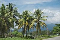 Coconut plantations at Sematan beach, Sarawak, Malaysia.