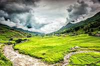 Terraced rice fields near Ta Van village in Valley of Muong Hoa river, Sa Pa District, Lao Cai Province, Vietnam.