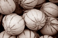 Gala Melon Fruit on Market Stall, France in Black and Sepia Tone.